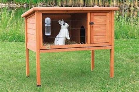 house   pet rabbit called quora
