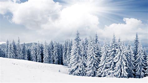 Winter Wallpaper Desktop by 2 Winter Tree And Snow Free Desktop Wallpapers For