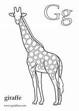 Giraffe Colouring Pdf Printable Letterland Alphabet Crafts Coloring Giraffes sketch template