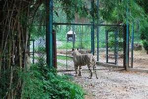 Borivali National Park (Sanjay Gandhi National Park) - tourmet