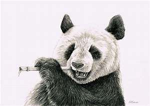 Pencil drawings, Pandas and Pencil on Pinterest