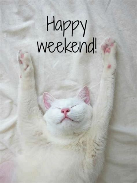 Happy Weekend Meme - 25 b 228 sta happy weekend meme id 233 erna p 229 pinterest roliga babyfoton roliga bilder och roliga