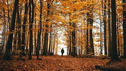 Autumn Forest Prayer Loneliness Thanksgiving Trees Impossible