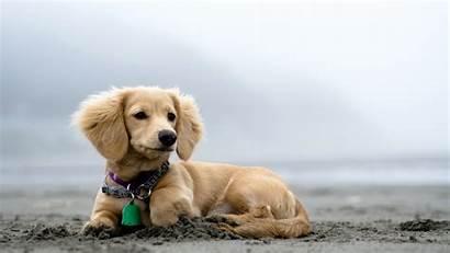 Dog Beach 1080p Wallpapers Desktop Backgrounds Bing