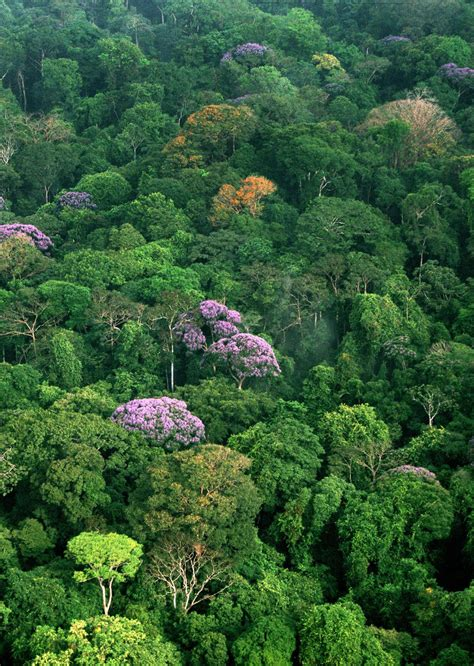Canopy Environment by Tropical Rainforest Canopy Smithsonian Institution