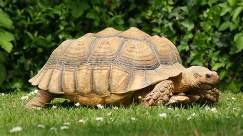 tortue qui ne mange pas