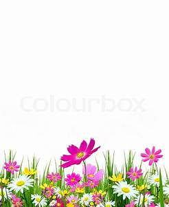 Spring flowers and grass on a white background | Stock ...