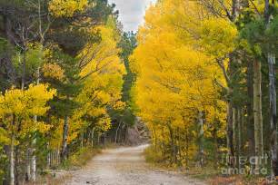 Boulder Colorado Fall Aspen