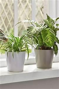 Grande Plante D Intérieur Facile D Entretien : de plantes d int rieur plantes vertes exotiques ou ~ Premium-room.com Idées de Décoration