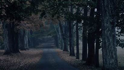 4k Scary Forest Wallpapers Creepy Dark Background