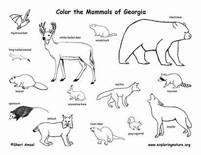 Mammals State Michigan Coloring Missouri Minnesota Georgia