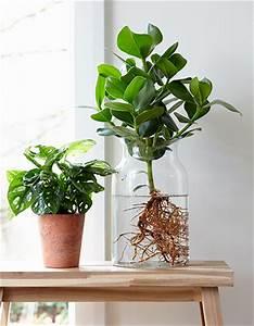 Anthurie Im Wasser : neuester trend anthurie im wasser f r mehr tipps zum garten und pflanzen schauen sie auch auf ~ Yasmunasinghe.com Haus und Dekorationen