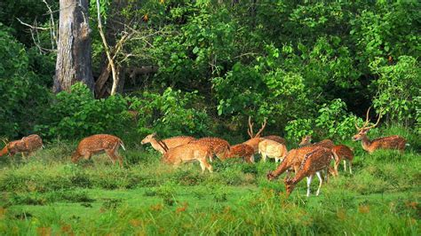 Wildlife Nature Scene In Protected Forest Sanctuary Of Sri