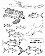 Tuna Yellowfin Drawing Fish Coloring Getdrawings sketch template