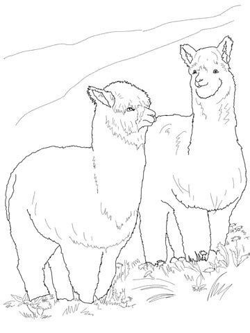 hairy alpacas coloring page supercoloringcom
