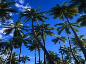 nature wallpapers desktop natuur palmbomen eiland forrest pag 24