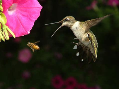 feed hummingbirds  garden  eaden