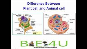 5 Major Differences Between Animal Cell And Plant Cell