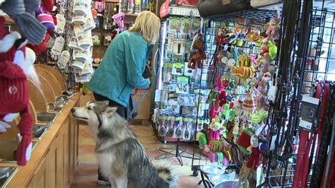 pet owners hunt for the perfect christmas gift for fido