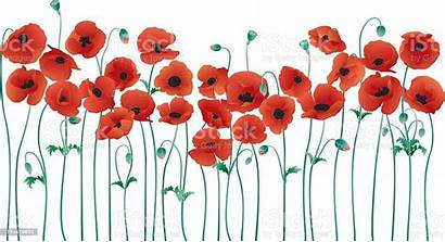 Poppies Row Illustration Vector Botany Seed Bud