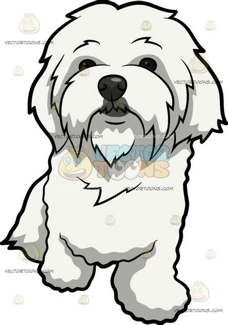 curiously cute maltese dog cartoon clipart vector toons