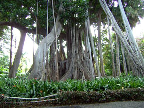 Teneriffa  Botanischer Garten Puerto De La Cruz Kanaren