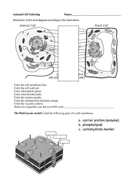 13 Best Images Of Printable Worksheets Cells  Animal Cell Diagram Worksheet, Printable