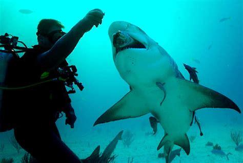 Marine biologist Andy Dehart, shark advisor to Discovery ...