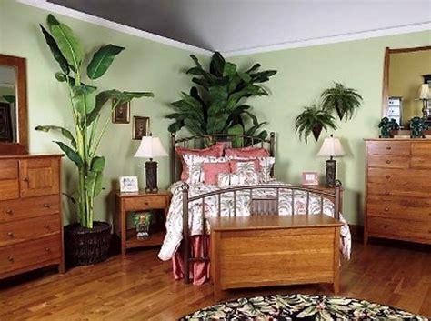plantas de interior fotos plantas  el dormitorio