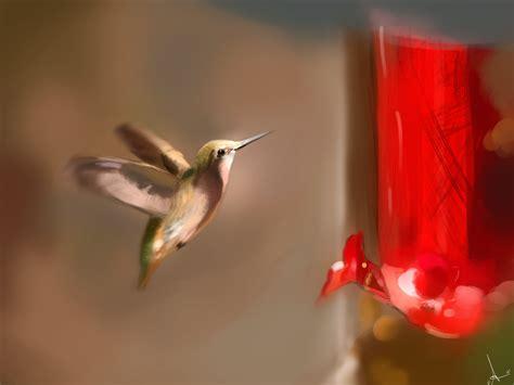 lifespan of a hummingbird hummingbird lifespan