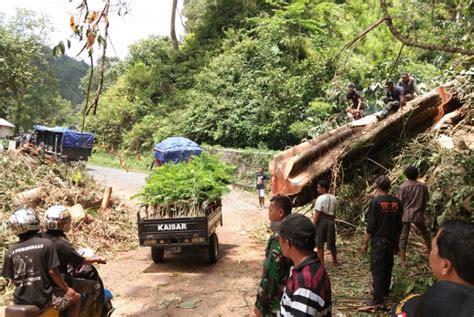 pohon tumbang akses jalur utama lumajang malang tertutup