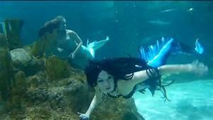 Coral Reef Aquarium Mermaids