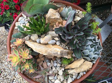 Succulent Container Gardening  Knecht's Nurseries