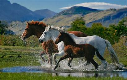 Horse Desktop Pixelstalk