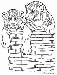 coloring pages of tiger - baby tiger coloring pages printable