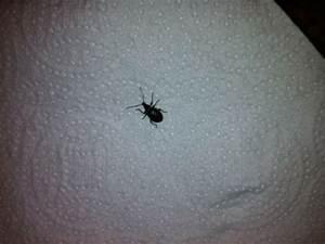 Insecte De Maison : insectes envahissant ma maison ~ Melissatoandfro.com Idées de Décoration