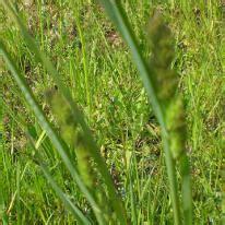 foods  avoid    allergic  grass pollen