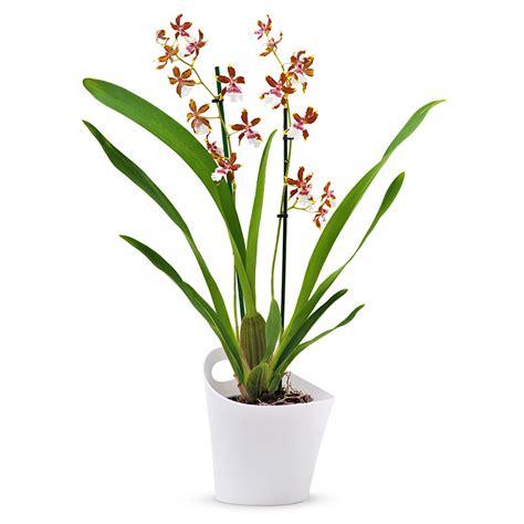 petit bureau de travail cambria orchidée tropic jungle blanc marron cadofrance