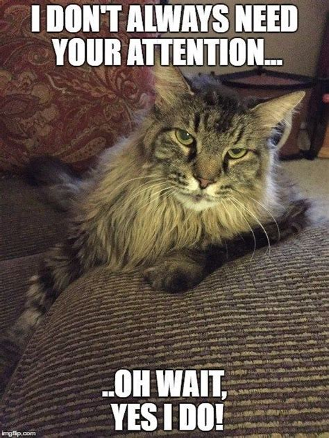 Also a plus is that all the clips are clean. Cat Memes - Clean Memes | Cat memes clean, Funny cat memes, Best cat memes