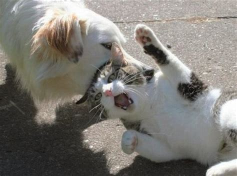 cats  dogs amazing creatures