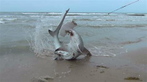 shark fishing blacktip hammer head florida fish catch tips cast