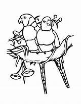 Coloring Lorikeet Pages Bird Birds Lorikeets Designlooter 2550 27kb 3300px sketch template