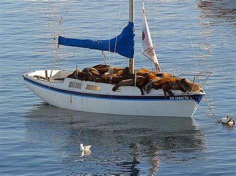 Sea Lion Boats by Sea Lion Facts Animal Facts Encyclopedia