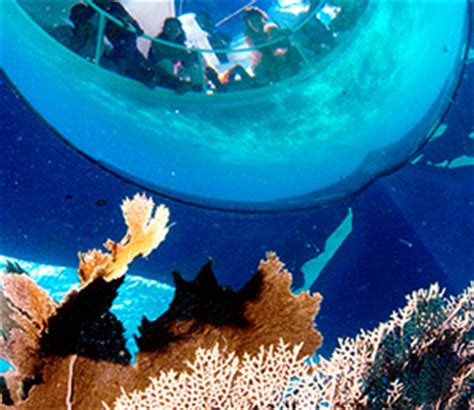 Glass Bottom Boat Key West by Key West Tours Things To Do In Key West