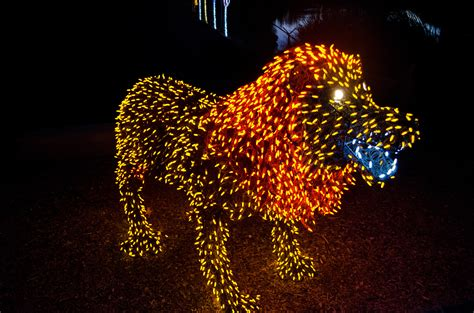 how much does zoo lights cost in phoenix zoolights at the phoenix zoo top places to see in
