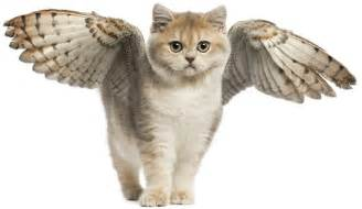 cats with wings your pet cats pet info club