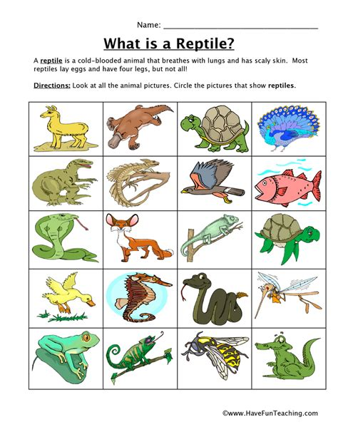reptile classification worksheet