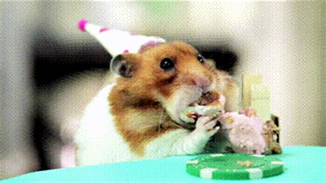 gif cuisine birthday gif find on giphy