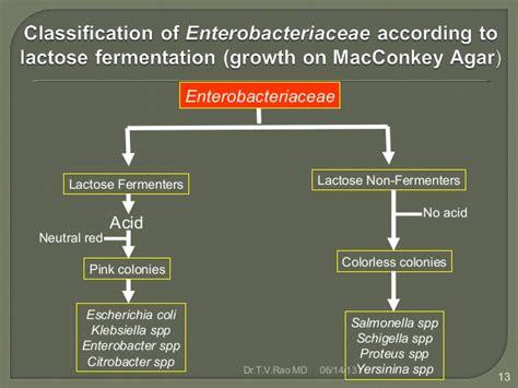 enterobacteriaceae identification