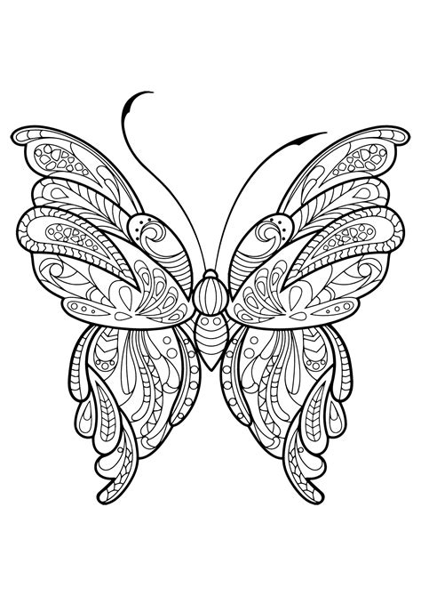 butterfly beautiful patterns  butterflies insects